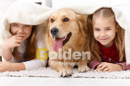 niñas con golden retriever