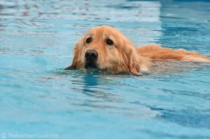 golden natacion piscina