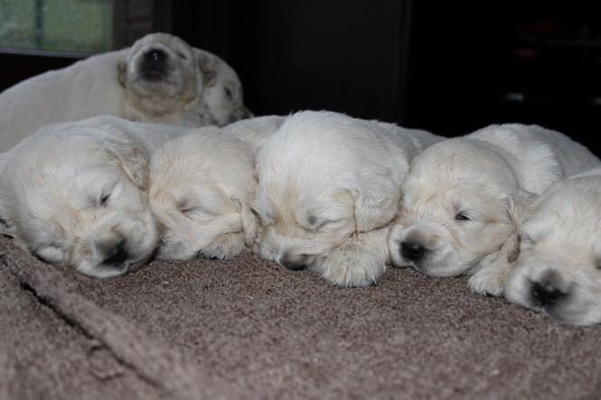cachorros-portda