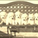 Cachorros-Diva-34-dias-20
