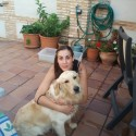 busco hembra golden retriever en madrid para cruce