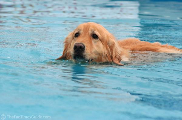 golden natacion playa piscina